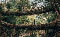 Double Decker Root Bridge, Cherrapunjee, Meghalaya